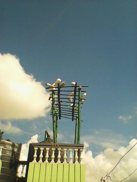 Pigeon-post