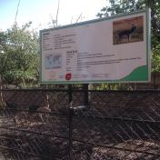 An information board on Black Bucks